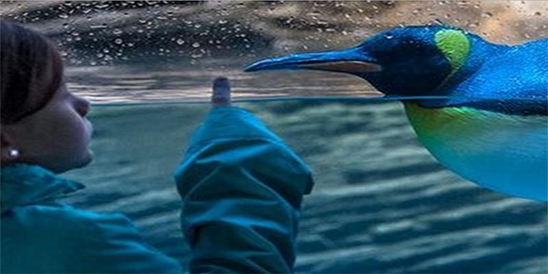 brunch Antwerpen Zoo d'Anvers brunch